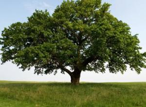 Tree, meditation, healing, what is, how to ground, healing